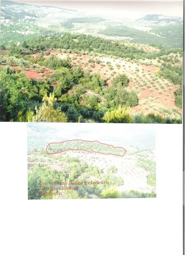 Hatay Orman Arazisi