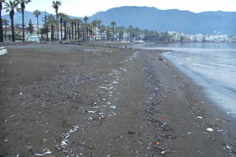 Marmaris Sahiline vuran ölü balıklar