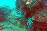 Zehirli balık türleri dalış merkezlerini endişelendiriyor…